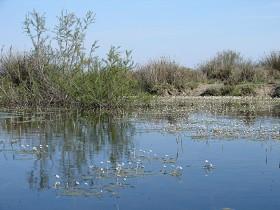 Plan National Actions Odonates | habitat de lestes macrostigma